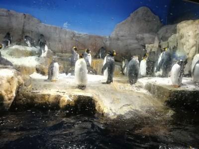 世界最大級!大阪が誇る水族館「海遊館」2